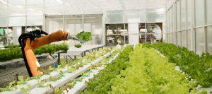 AppHarvest מתכננת להקים עוד 15 חממות במהלך 5 השנים הבאות. צילום: shutterstock
