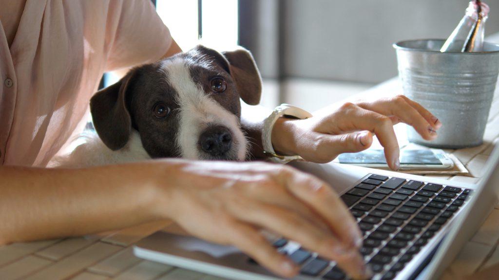 המשרד הביתי החדש. מגלם בתוכו לא מעט יתרונות   צילום: Shutterstock