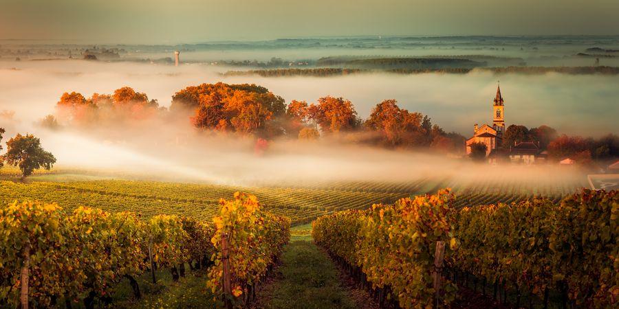 כרמי ענבים בחבל בורדו בצרפת. צילום: shutterstock