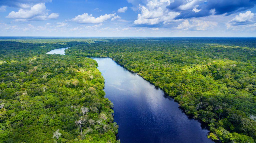 יערות גשם באמזונס. כעת לרכישה בפייסבוק   צילום: Shutterstock