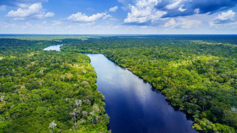 יערות גשם באמזונס. כעת לרכישה בפייסבוק | צילום: Shutterstock