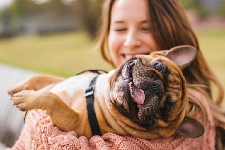 כך הפכה סין לשוק חיות המחמד הגדול בעולם   צילום: Shutterstock